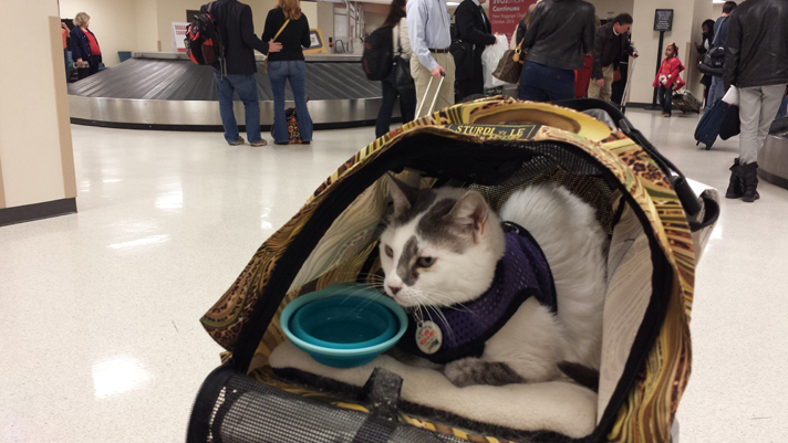 Advice for people planning to take a pet on a plane