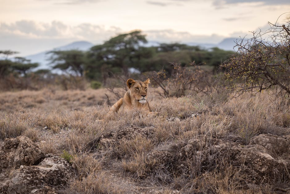10 Iconic Safari Animals You Will See On a Tanzania Tour